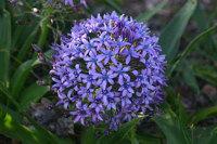 The Algarve in full bloom