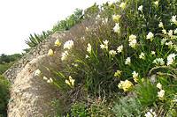 Algarve Flowers