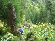 Pico Island View